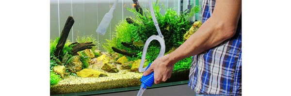 Comment entretenir son aquarium ?